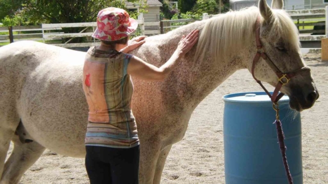Hug a horse programs - client with horse